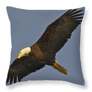 Bald Eagle Fly Over Throw Pillow