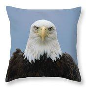 Bald Eagle Haliaeetus Leucocephalus Throw Pillow