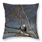 Bald Eagle In A Tree Throw Pillow