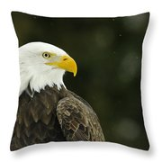 Bald Eagle In Ecomuseum Zoo Throw Pillow
