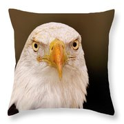 Bald Eagle Looking In Throw Pillow