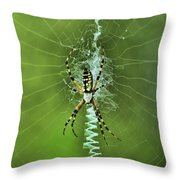 Banana Spider With Web Throw Pillow