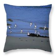 Band Of Seagulls Throw Pillow