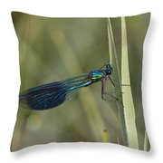Banded Demoiselle Calopteryx Splendens Throw Pillow by Konrad Wothe