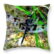 Banded Pennant Dragonfly Throw Pillow
