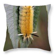 Banded Tussock Moth Caterpillar Throw Pillow