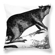 Bandicoot Throw Pillow