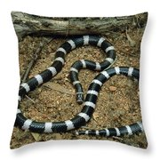 Bandy-bandy Vermicella Annulata Throw Pillow