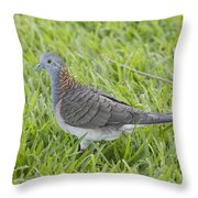 Bar-shouldered Dove Throw Pillow