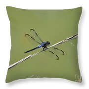 Bar-winged Skimmer Throw Pillow