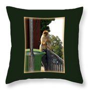 Barbary Ape Throw Pillow