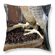 Barbary Falcon Feet Throw Pillow