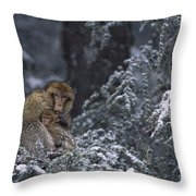 Barbary Macaque Male With Infant Throw Pillow