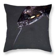 Barbeled Dragonfish Throw Pillow