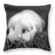 Barbie Guinea Pig Throw Pillow