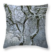 Bare, Snow-covered Tree In Winter Throw Pillow
