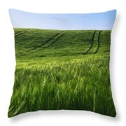 Barley, Co Down Throw Pillow