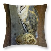 Barn Owl At Roost Throw Pillow