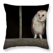 Barn Owl In Window Throw Pillow