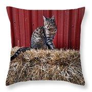 Barnyard Cat Throw Pillow