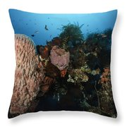 Barrel Sponge On Liberty Wreck, Bali Throw Pillow