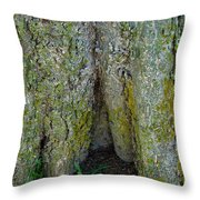 Base Of The Tree View Throw Pillow