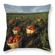 Baskets Of Fresh Tomatoes In A Field Throw Pillow
