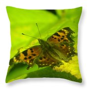 Basking Butterfly  Throw Pillow