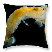 Bay Ghost Shrimp Throw Pillow