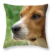 Beagle Gaze Throw Pillow