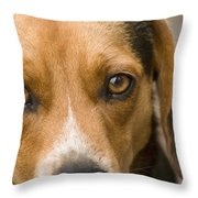 Beagle Hound Dog Eyes Of Love Throw Pillow