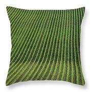 Bean Field, Holland, Manitoba Throw Pillow