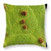 Bean Leaf With Rust Pustules Throw Pillow