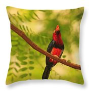 Bearded Barbet Throw Pillow by Stuart Westmorland
