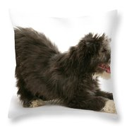 Bearded Collie Pup Throw Pillow