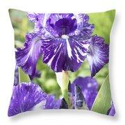 Bearded Iris Iris Germanica Batik Throw Pillow
