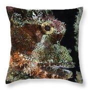 Bearded Scorpionfish, Indonesia Throw Pillow