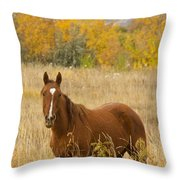 Beautiful Chestnut Horse Throw Pillow