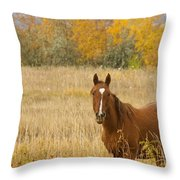 Beautiful Grazing Horse Throw Pillow