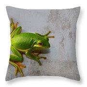 Beautiful American Green Tree Frog On Grunge Background  Throw Pillow