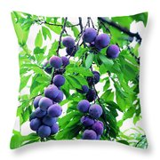 Beautiful Blue Plums On The Tree Throw Pillow