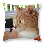 Beautiful Cat With Yellow Eyes Closeup Throw Pillow