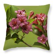 Beautiful Colors Throw Pillow