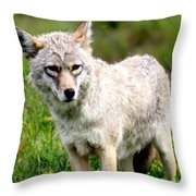 Beautiful Coyote In Alaska Throw Pillow