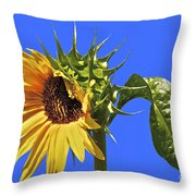 Beautiful Moves In Curves Throw Pillow