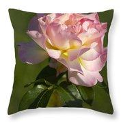 Beautiful Pink And Yellow Climbing Peace Rose Throw Pillow