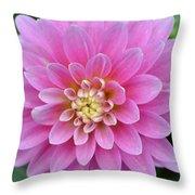 Beautiful Pink Dahlia Flower Throw Pillow
