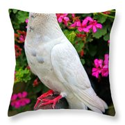 Beautiful White Pigeon Throw Pillow