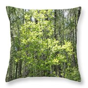 Beauty Of Trees Throw Pillow