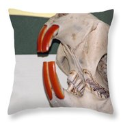 Beaver Teeth Throw Pillow